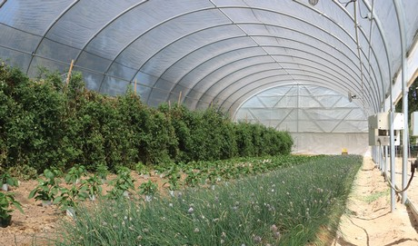 growspan greenhouses for sale include a 34u0027 x 96u0027 polycarb greenhouse and a 26u0027 x 72u0027 gothic pro greenhouse both of these structures can be outfitted with