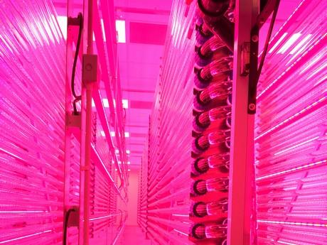 & UK: LED lighting for new sustainable algae production facility
