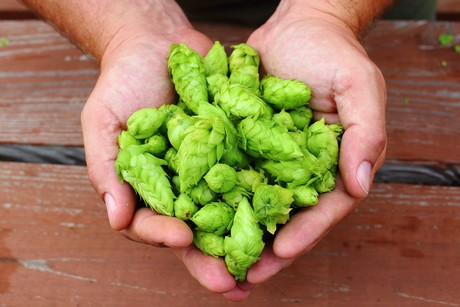 US (IN): Grants for hops and hydroponic lettuce