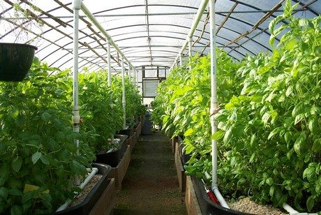 greenhouse farming in kenya pdf