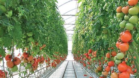 A Sample Greenhouse Farming Business Plan Template