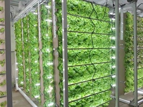 Will automated indoor farming provide a solution to food