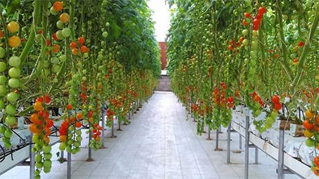 The future of hydroponics in Indonesia