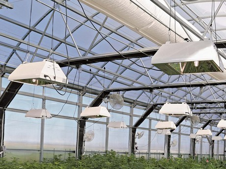 How Lighting Companies Are Tackling Plant Quality Greenhouse