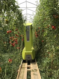 New tomato harvest robot GRoW being tested in the greenhouse