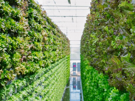US (TX): Vertical farm introduces chemical-free produce line
