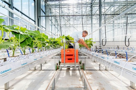 Hortidaily Can Artificial Intelligence Do As Well