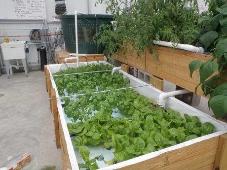 Pomfret School passive solar aquaponics greenhouse comes to life