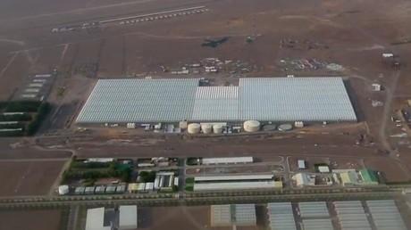 Abu Dhabi: Cultivation started in Al Dahra BayWa greenhouse